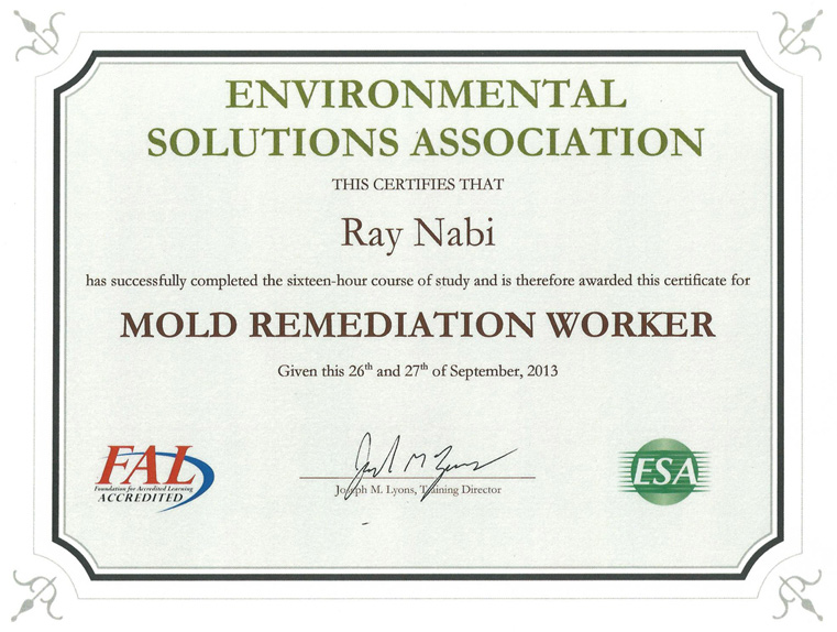 Mold Remediation Worker